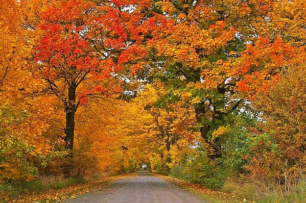 Fall+Foliage+Road